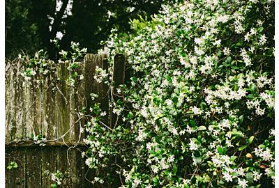 De beste vroege voorjaarsbloeiers