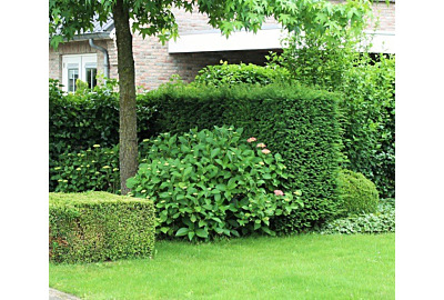 Breng leven in de tuin met deze vier planten