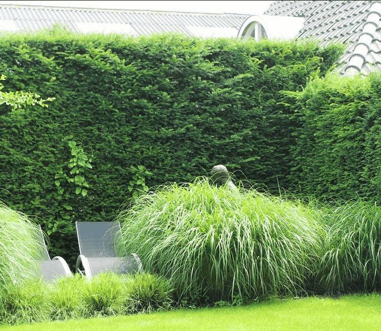 Groenblijvende tuinafscheiding