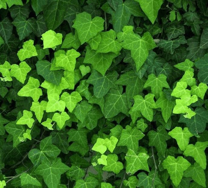 Groene afscheiding tuin; altijd op kleur
