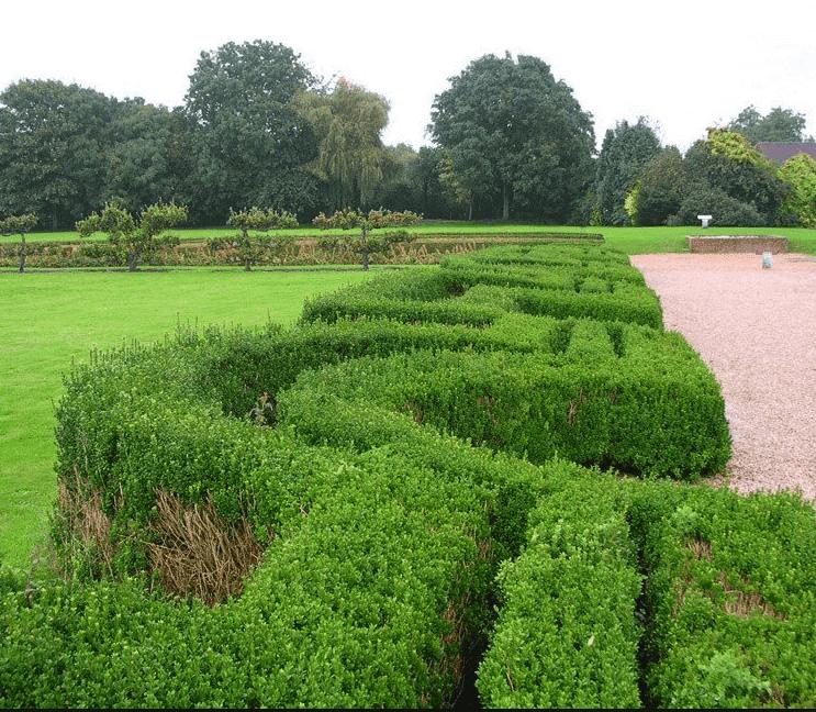 Hoeveel liguster planten per meter?
