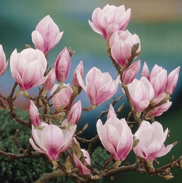 Mooie vaste planten