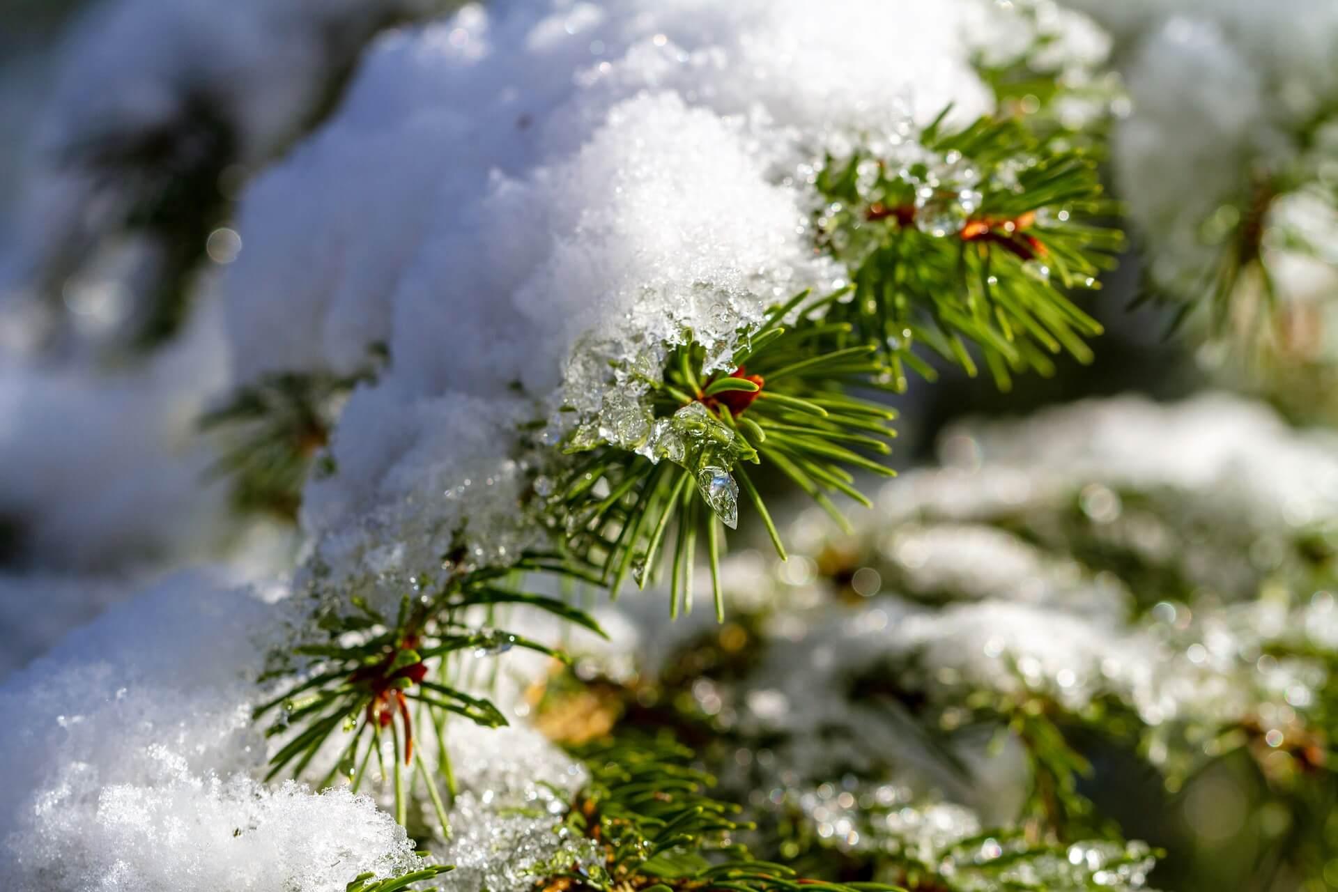 5 tips om uw tuin sneeuwvrij te maken