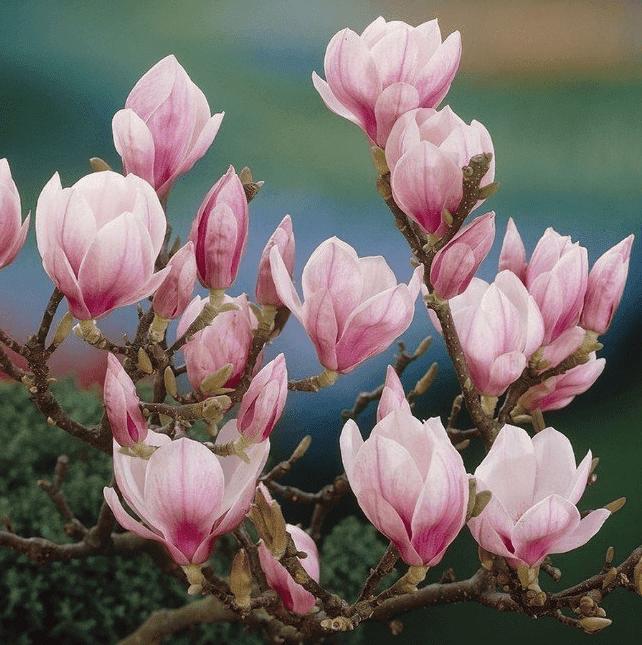 Vaste planten voor buiten