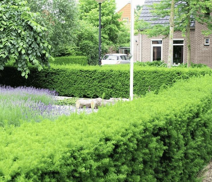 Vaste planten voor in de tuin