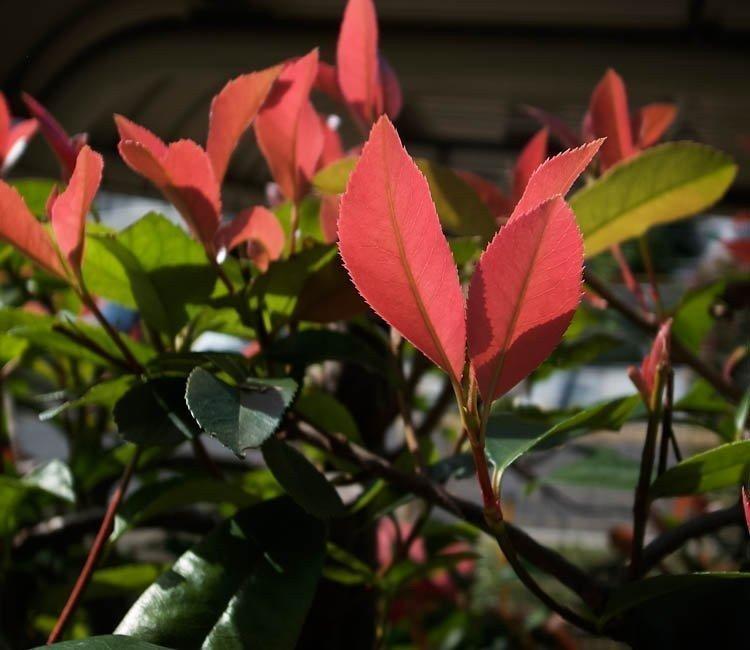 Tuin-ideeën: bijzondere tuinplanten voor de lente