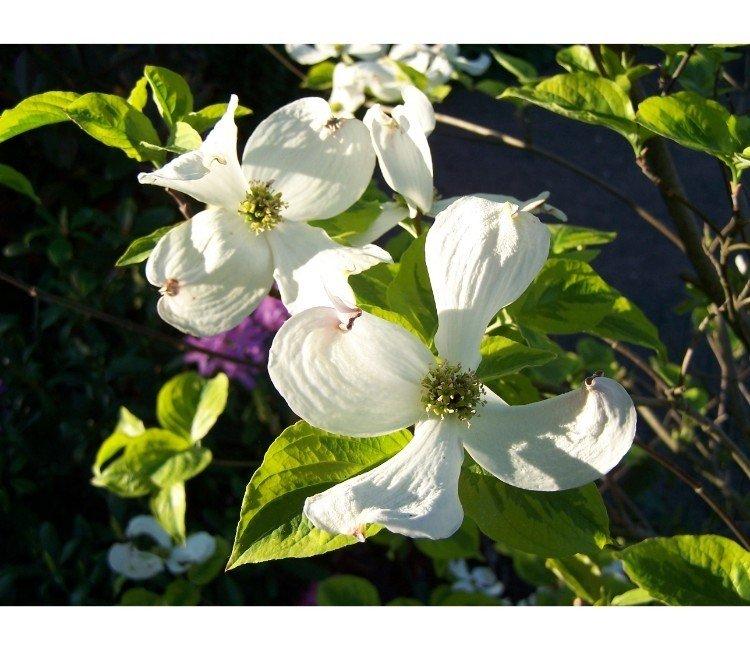 Mooie bloeiende planten in het voorjaar