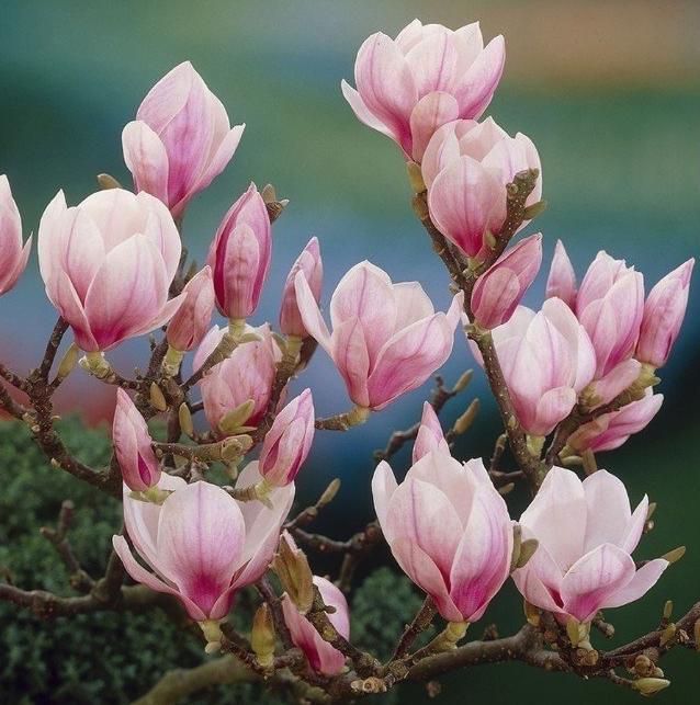 Bloeiende vaste planten