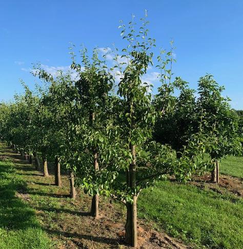 Tuin-inspiratie: uw eigen fruitboom in de tuin