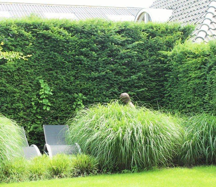 Welke groenblijvende kant en klaar hagen zijn er allemaal?