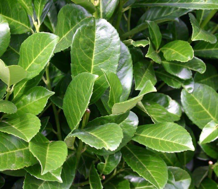 Welke opties zijn er voor hoge vaste planten?