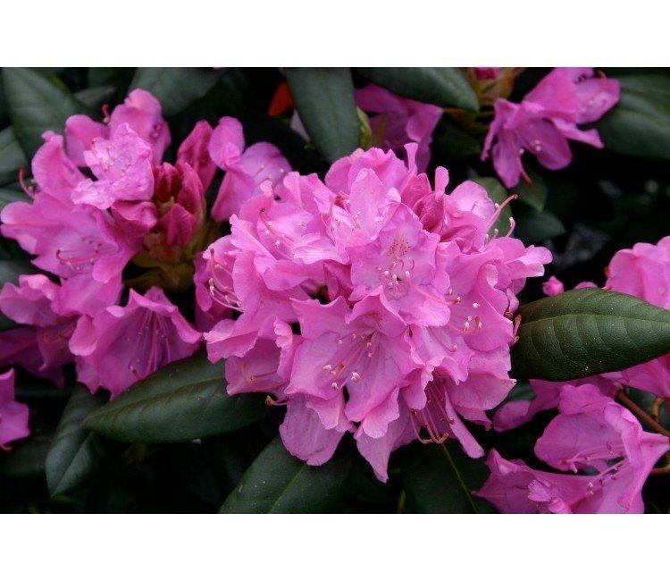 Welke soorten struiken met bloemen zijn er?