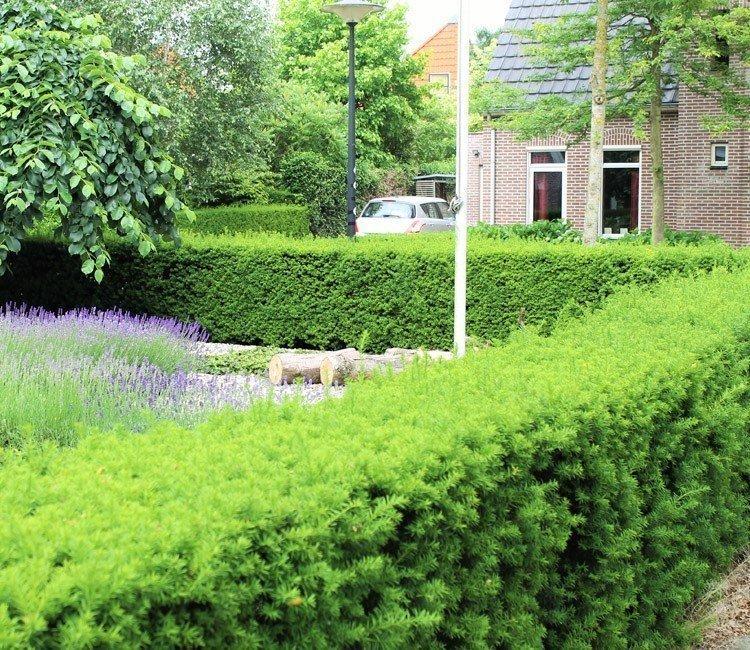 Tuinplanten of struiken voor een onderhoudsvriendelijke tuin