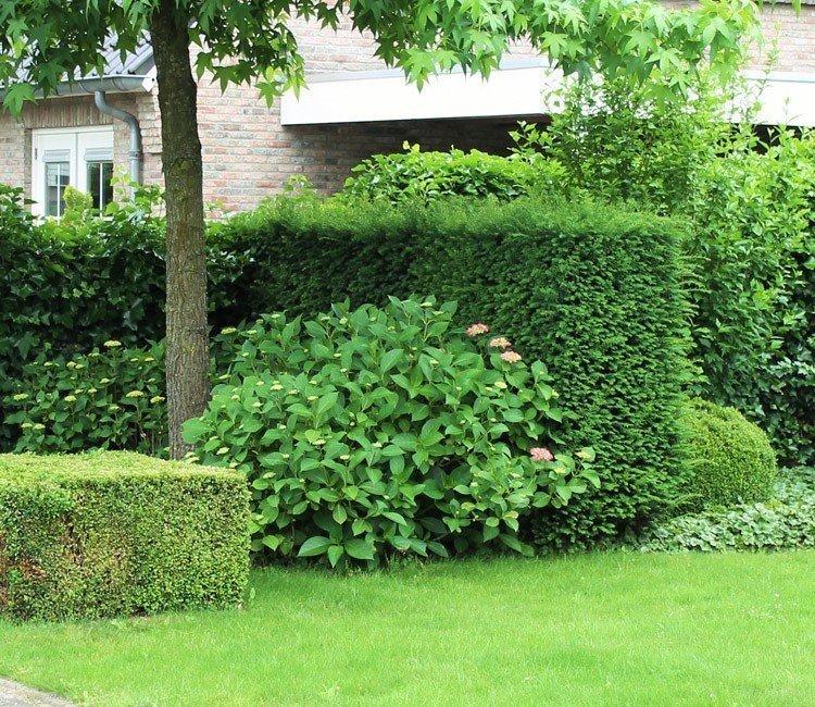 Vaste planten voor buiten: de mogelijkheden