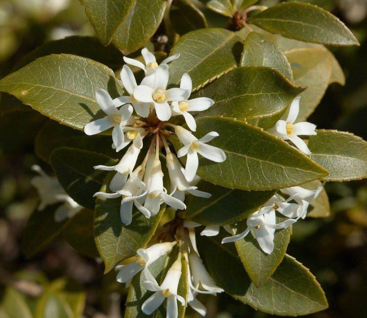 Welke planten bloeien in de lente?