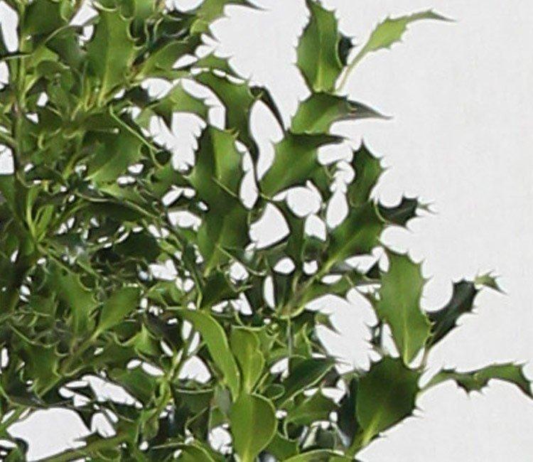 Wit bloeiende heesters: de hele winter een levendige tuin
