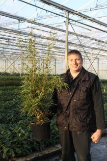 Bamboe Pot 100-125 cm Pot
