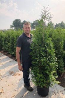 Levensboom 'Brabant' Pot 150-175 cm Pot