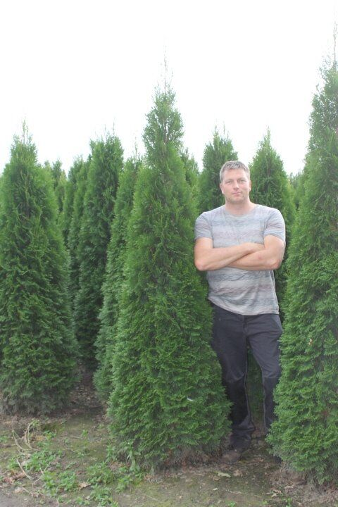 Levensboom 'Smaragd' (200-225 cm) Extra kwaliteit Kluit